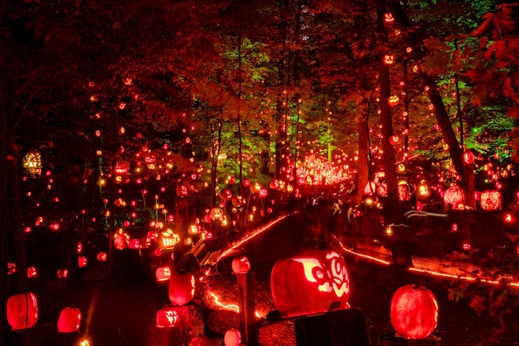 More than 5,000 jack-o-lanterns will shine this fall in Kentucky