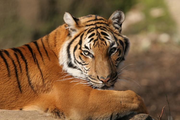 Get $1 admission at the Cincinnati Zoo!