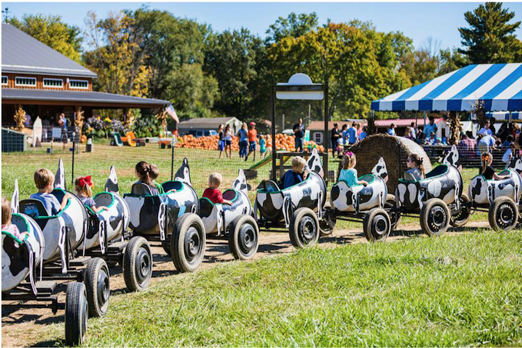 10 Favorite Fall Festivals in Cincinnati